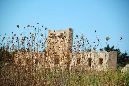 dead flowers: Ruin and dead flowers