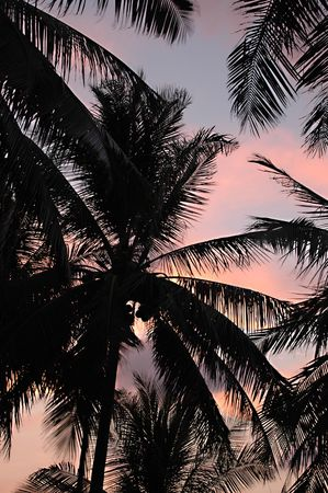 Sunset and palm trees photo