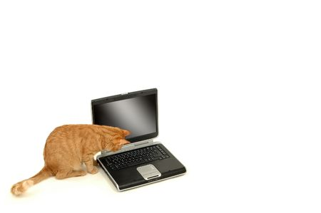 A cat is lokking at the keyboard photo