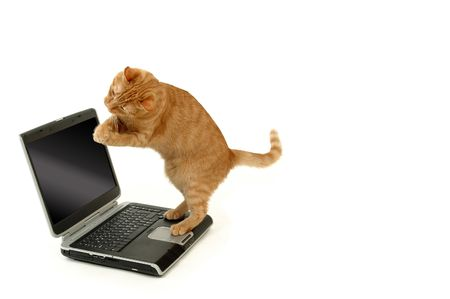 Extreamly happy cat is standing on a laptop photo