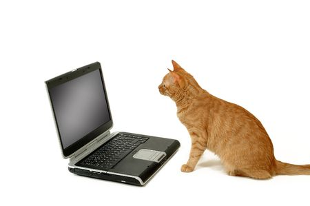 A cat is lokking at a laptop photo