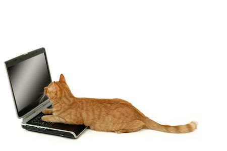Cat is lying in front of a laptop photo