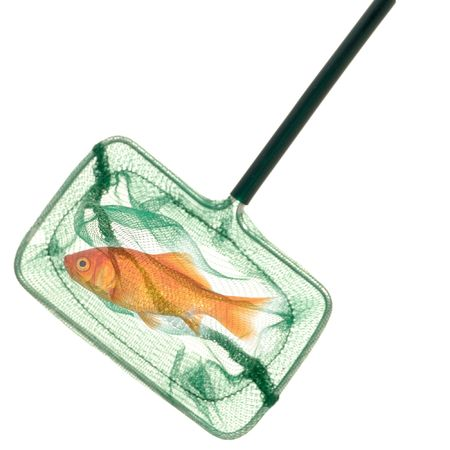 A goldfish in a fishingnet. Taken on a clean white background. Stock Photo - 697314