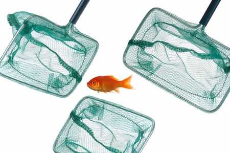 A godfish is surrounded by 3 fishingnets. Taken on a clean white background. Stock Photo - 697305