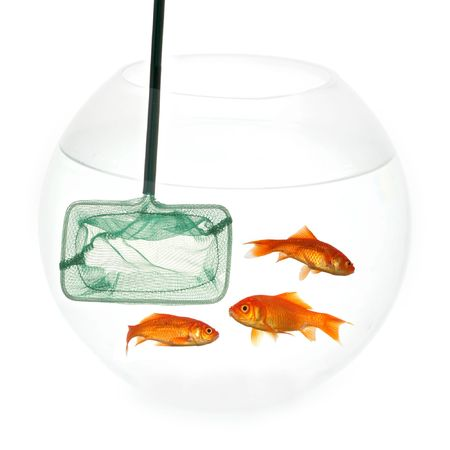 Fishingnet in a fishbowl whith goldfish. Taken on a clean white background. photo