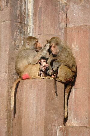 Monkey family sitting in the sun Stock Photo - 732954