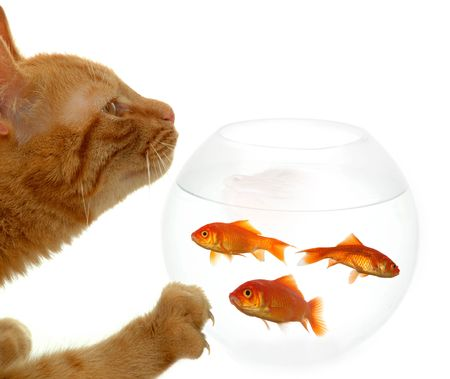 Cat is standing in front of a bowl of fish. photo