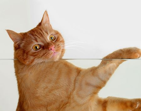 Cat is resting on a glass table Stock Photo - 741223