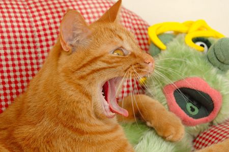 yawing: Cat and doll is yawing