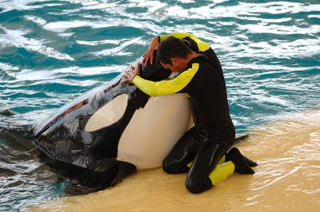 Man is hugging a very big killer whale Stock Photo - 875745