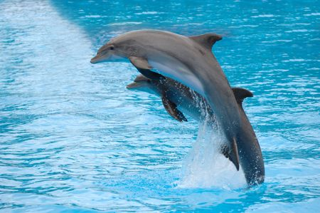dolphin jumping: Two dolphins are jumping out of the water. Stock Photo