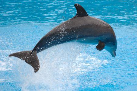 Happy dauphin sautant hors de l'eau