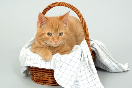 Young kitten is resting in a basket photo
