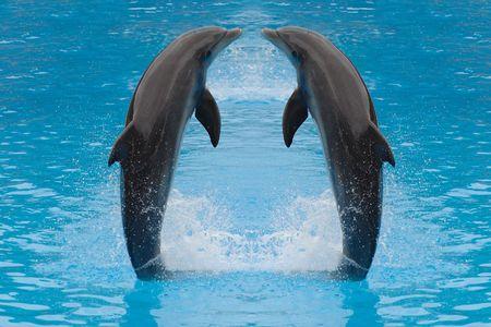 Dolphin gemelos están saltando en el agua.  Foto de archivo