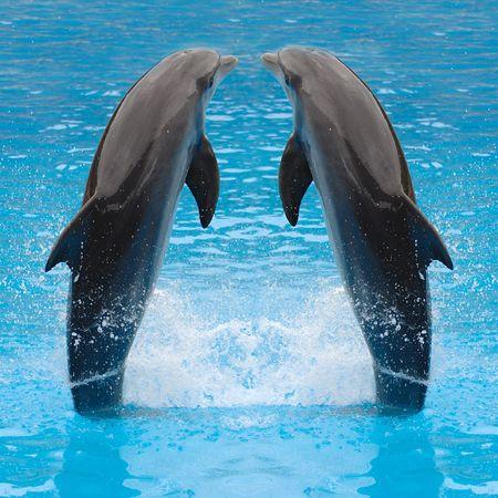 Los gemelos del delfín están saltando en el agua. Foto de archivo