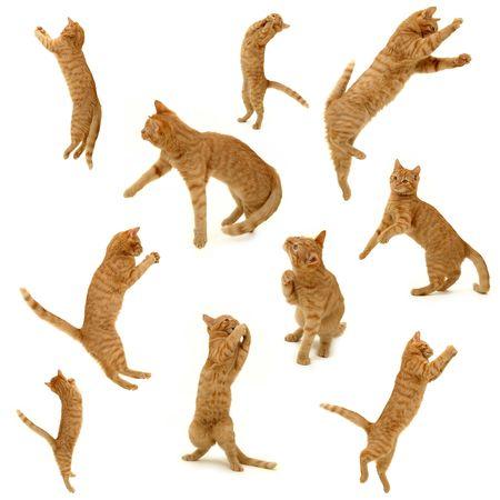 gato jugando: Colecci�n de gatitos en la acci�n. Sobre fondo blanco. 3500 x 3500 p�xeles.
