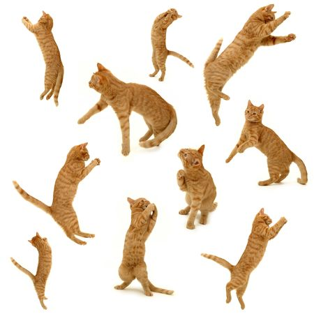 cats playing: collection of kittens in action. On white background. 3500 x 3500 pixels.
