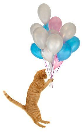 gato naranja: Volar en globo cat. Tomados sobre fondo blanco limpio.