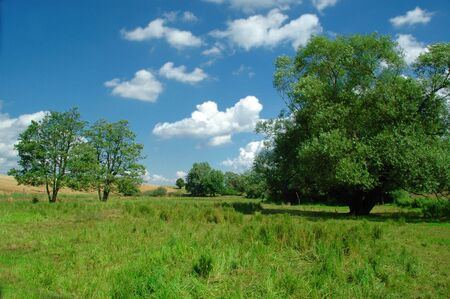 Idyllic landscape with blue sky, white clouds, green grass and trees photo