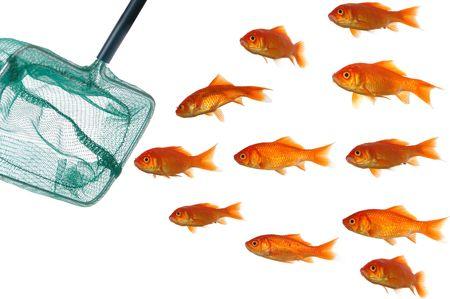 Stupid peces nadando es derecho en una red de pesca. Tomados sobre fondo blanco limpio.
