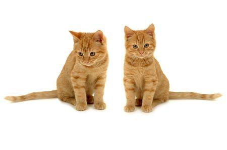 Dos dulces gatitos está sentado al lado de la otra sobre fondo blanco.  Foto de archivo