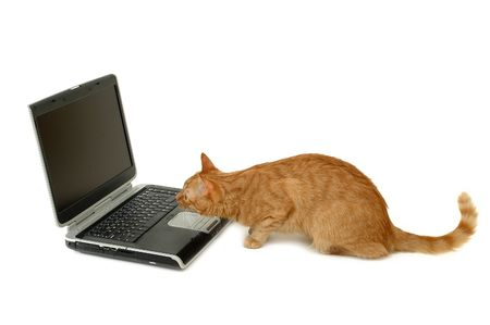interested: A cat is looking very interested on a laptop screen Stock Photo