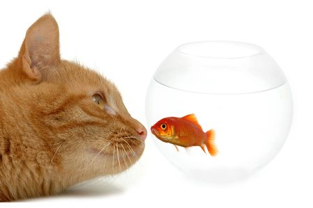Strange friends or naive goldfish? Stock Photo - 959069