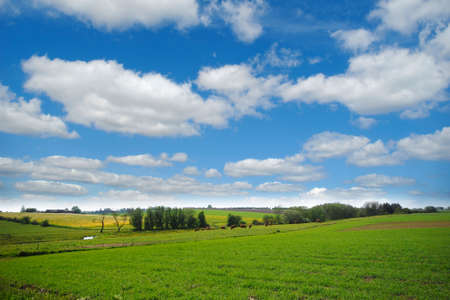 Idylic farmlandscap with green fields, cows and blue cloudy sky. photo