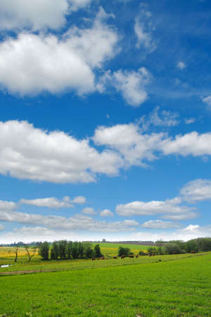 Idylic farmlandscap with green fields, cows and blue cloudy sky. Stock Photo - 962888