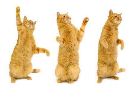 Tres gatos están de pie en su bolsa de pies