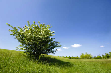 Green bush on a green field Stock Photo - 981040