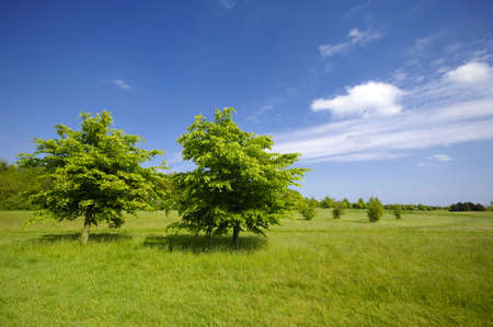 Two green trees on a green field photo