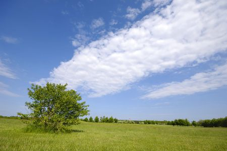 A green tree on a green field with blue and cloudy sky. Stock Photo - 981050