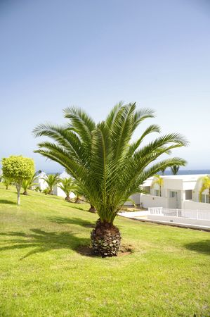 Palms in a nice garden with white houses in the background.