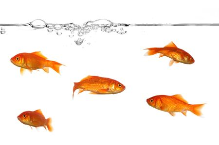 A groupe of gold fish swimming in the water. Stock Photo - 1584628