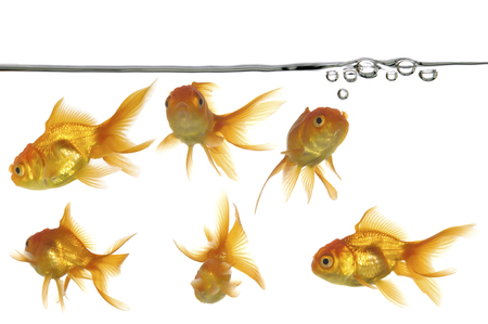 linea de flotaci�n: De flotaci�n con peque�as burbujas de aire y los peces de oro