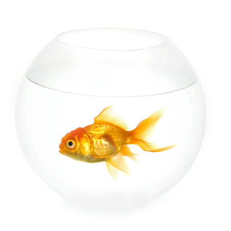 Alone goldfish is swimming in a fish bowl Stock Photo - 1692924
