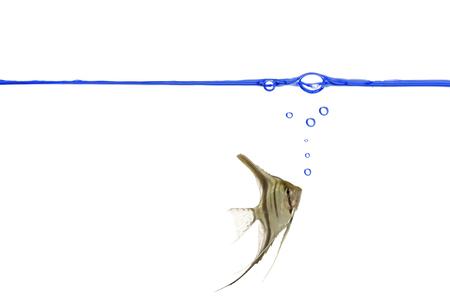 wasserlinie: Scalare maiking airbubbles unter dem Waterline. Lizenzfreie Bilder