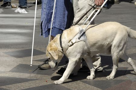 Guide dog is helping bilnd people photo