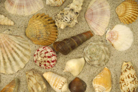 Collection with many different shells in the sand photo