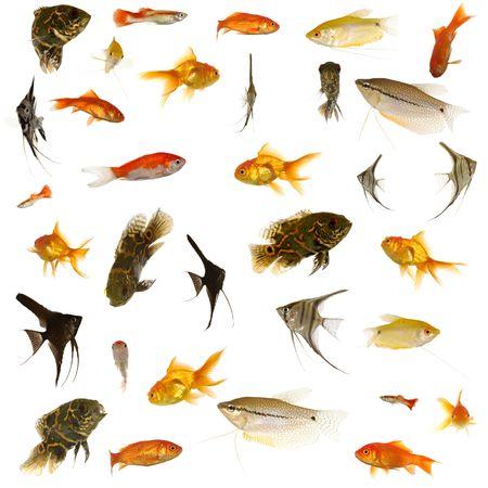 민물의: Fish collection with many different tropical fish.