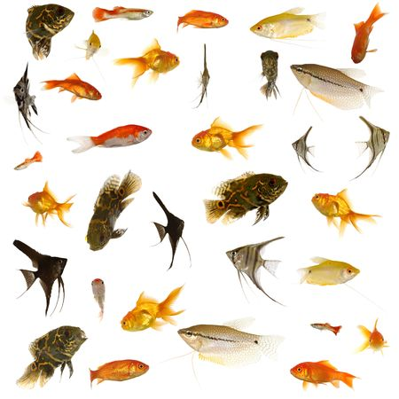 Fish collection with many different tropical fish. photo