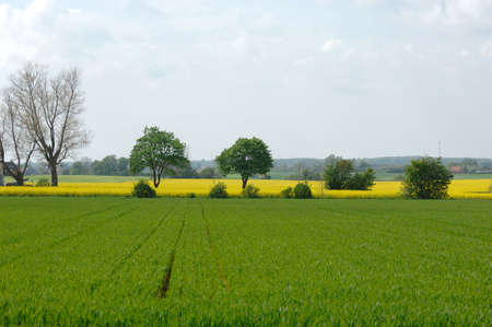Farmland with green and yellow fieldss photo