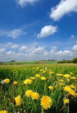 Landscape wity yellow flowers and a blue and cloudy skay. Stock Photo - 2525996