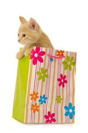 sweet shop: Sweet kitten is sitting in a shopping bag. Stock Photo