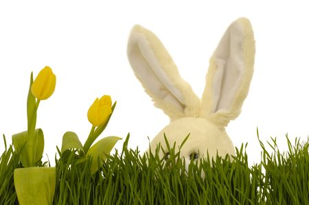 Easter bunny is playing hide and seek behind tulips and green grass. photo