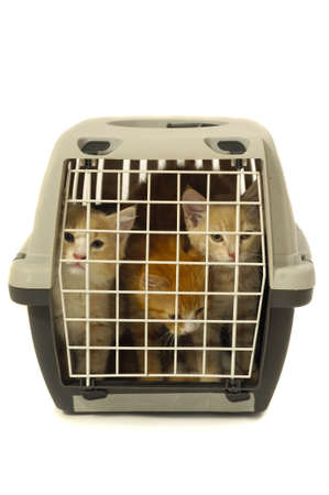 Kittens in transport box on white background Stock Photo