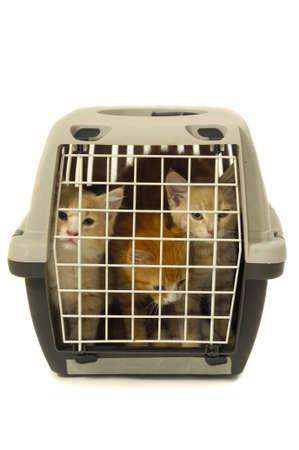 Kittens in transport box on white background Stock Photo - 2670152