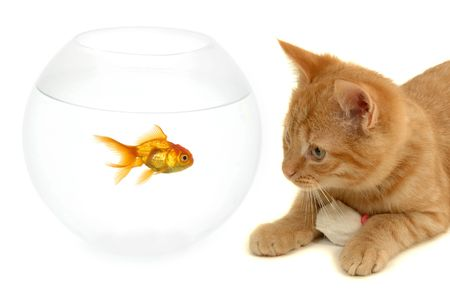 Cat is looking at a goldfish in a fish bowl photo