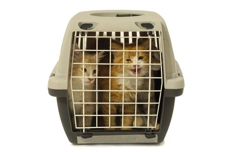 Kittens in transport box on white background Stock Photo - 2707126